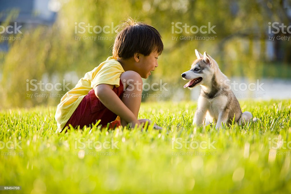 Young Asian boy playing with puppy on grass stock photo