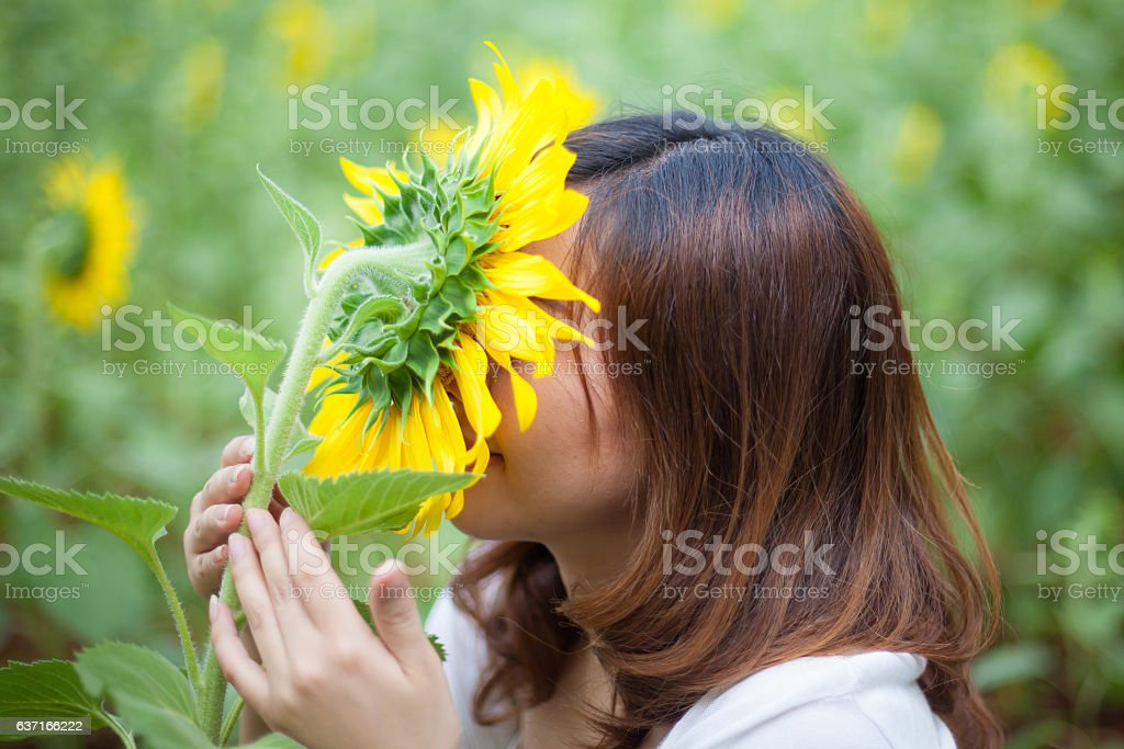 Young asian woman in sunflower field stock photo