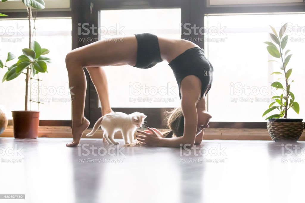 Young attractive woman in Urdhva Dhanurasana pose, home and cat stock photo