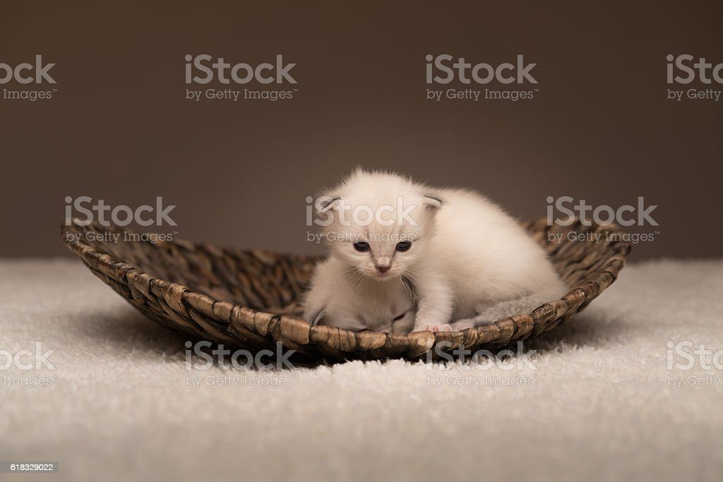 young baby cats at home stock photo