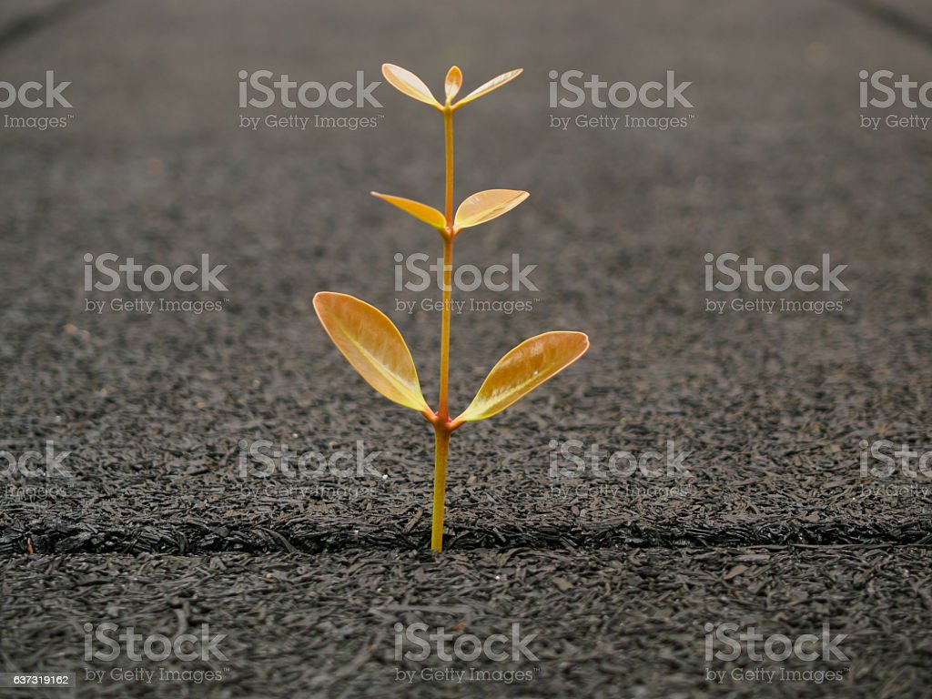 Young Baby tree grow up on gap of block stock photo