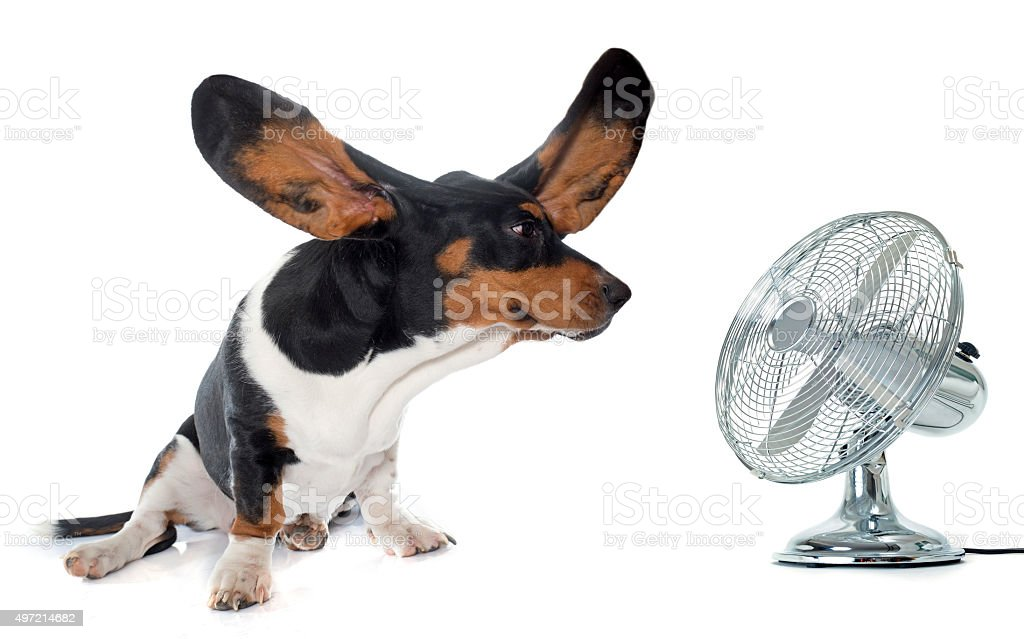 young Basset Hound and ventilator stock photo