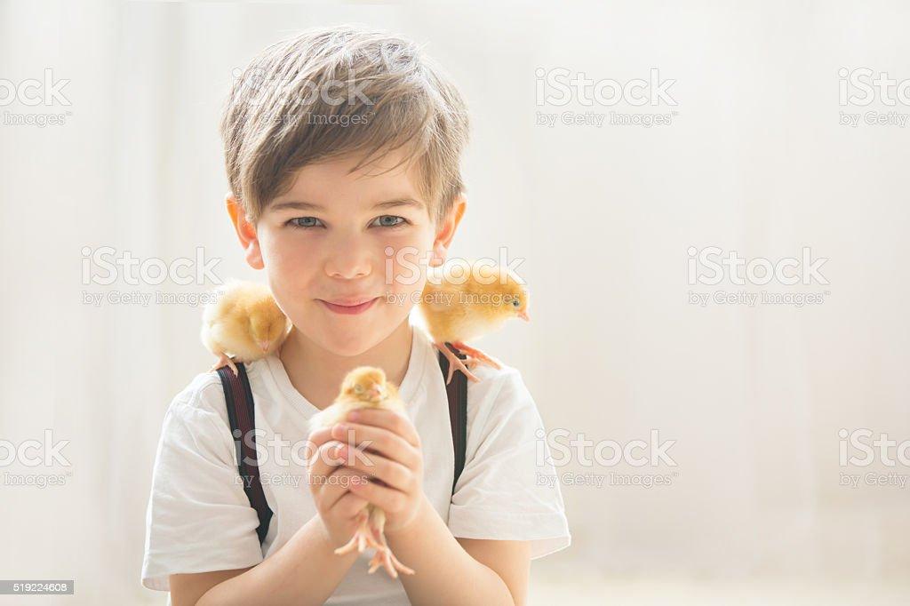 Young beautiful prechool boy, playing with little newborn chick stock photo