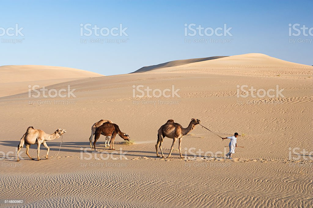 Young bedouin with camels on Western Sahara Desert in Africa stock photo