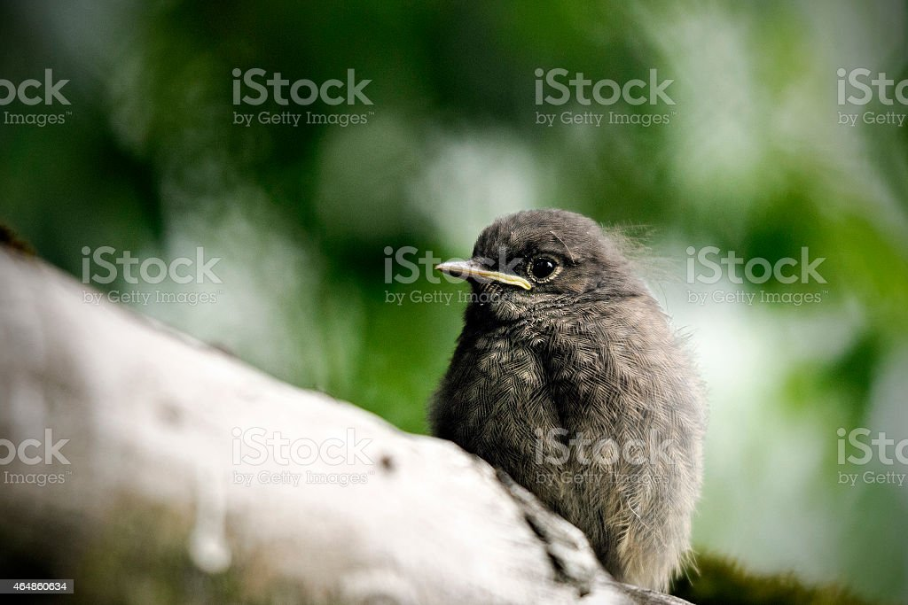 Young bird waiting for mother stock photo