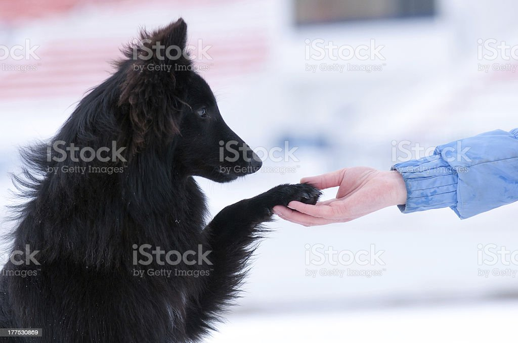 young black dog training royalty-free stock photo