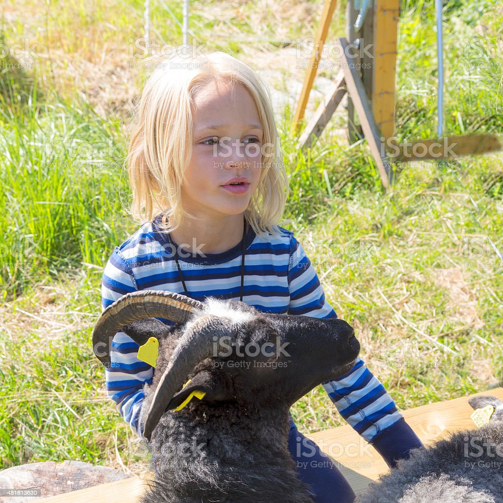 Young, blond, dreamy boy caressing a sheep. stock photo
