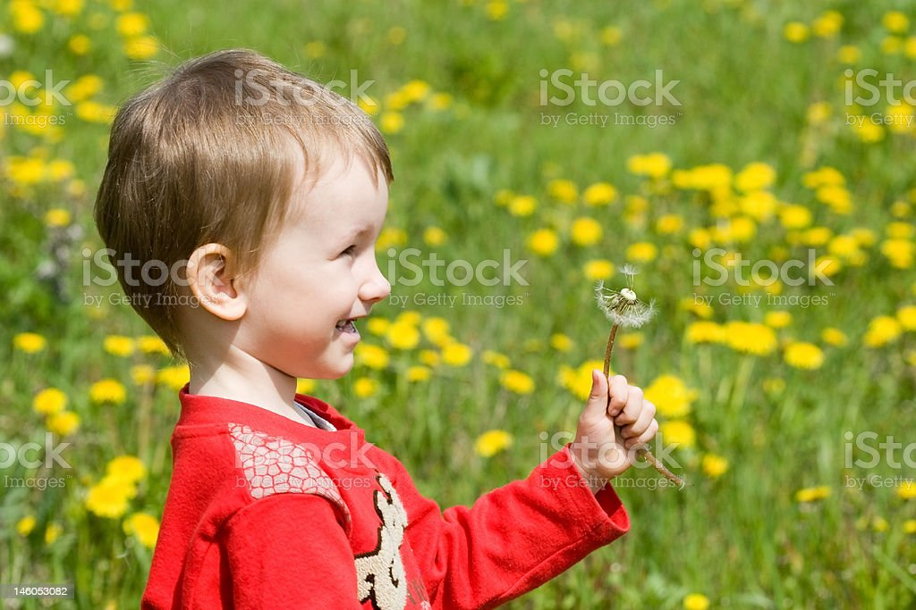 Young boy and a dandelion flower royalty-free stock photo