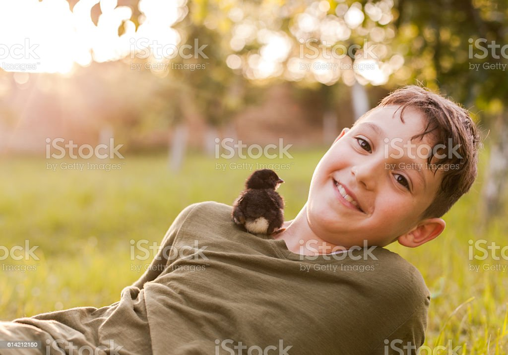 Young boy and baby chicks stock photo