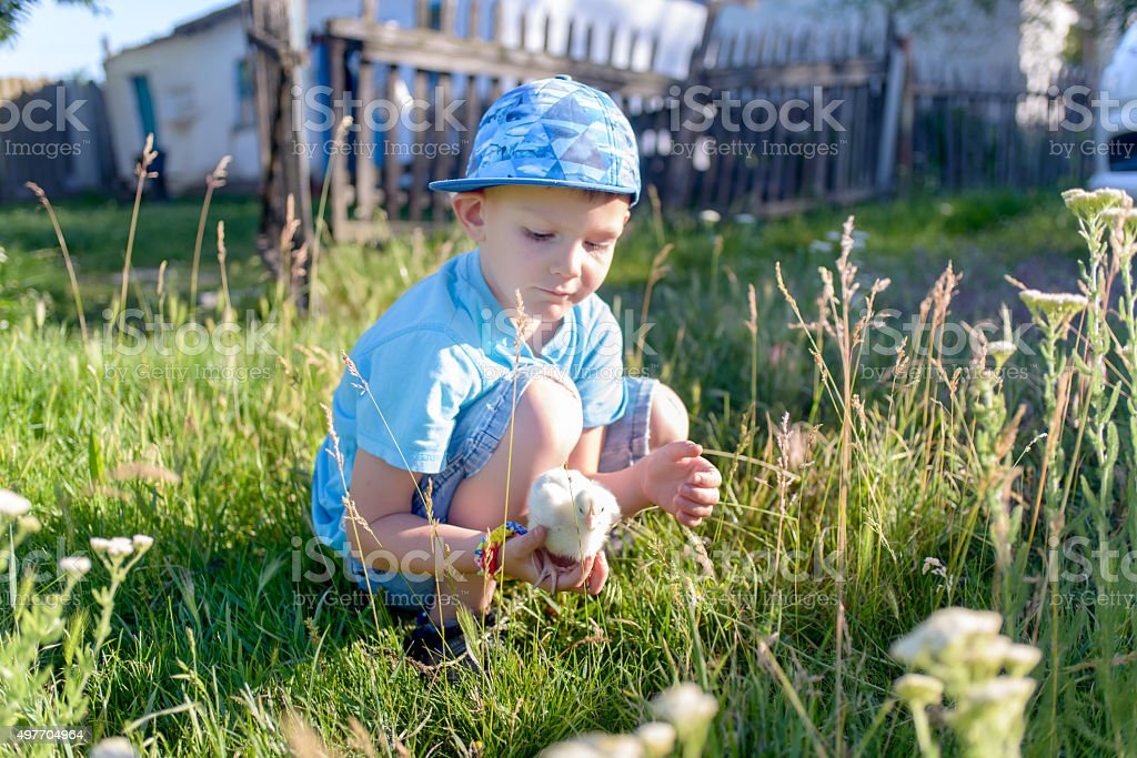 Young Boy at the Green Grasses Holding a Chick stock photo