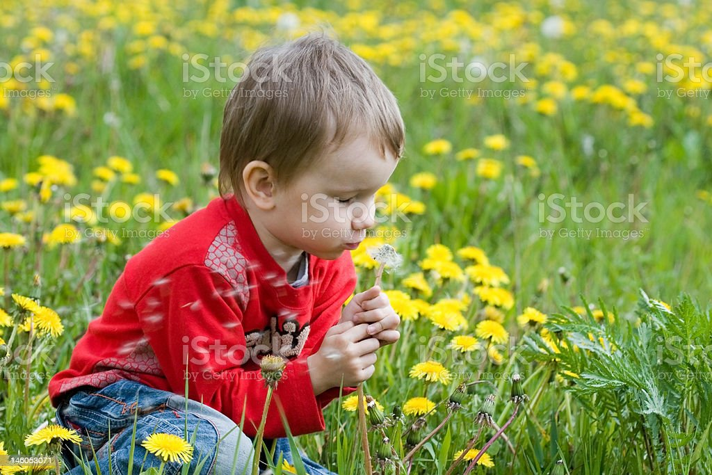 Young boy blowing seeds of a dandelion flower royalty-free stock photo