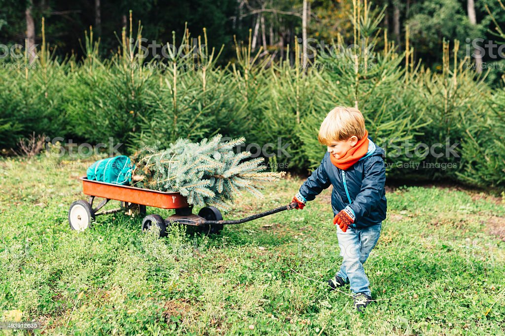 Young Boy Bringing Home A Christmas Tree stock photo