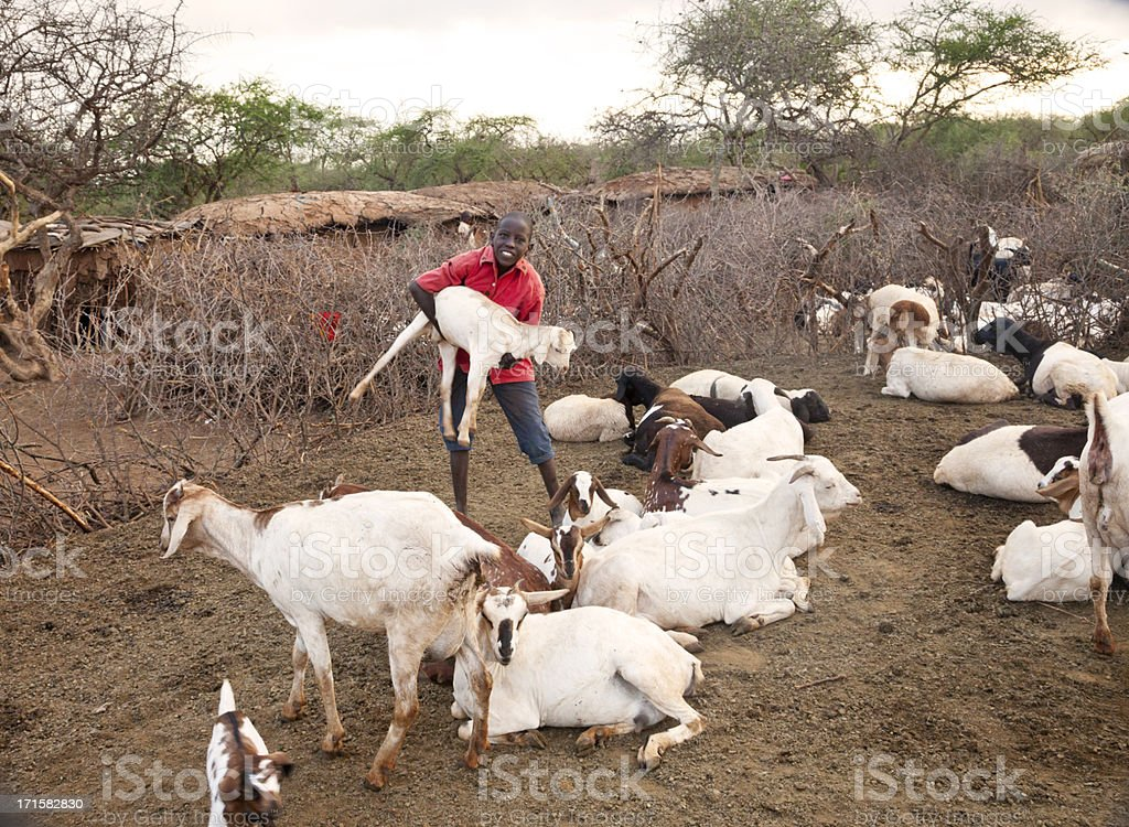Young boy caring for his goats in Masai village. royalty-free stock photo