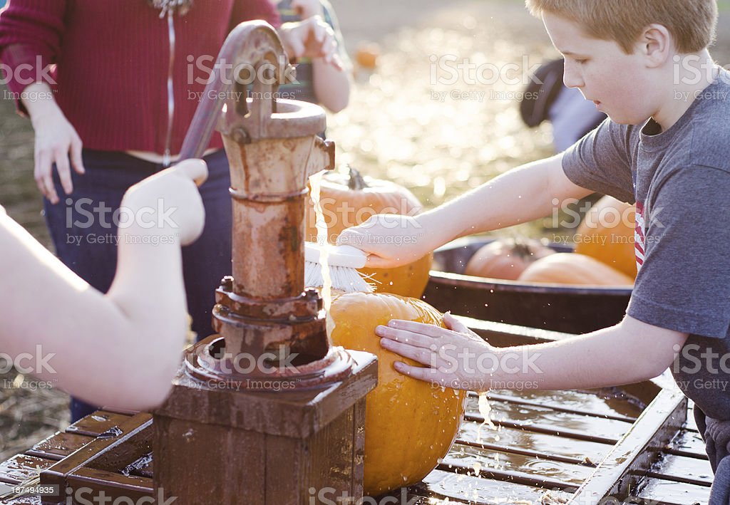 Young boy cleaning pumpkins at a pumpkin patch royalty-free stock photo
