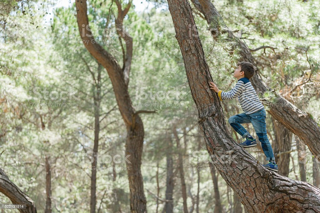young boy climbs up a tree trunk stock photo