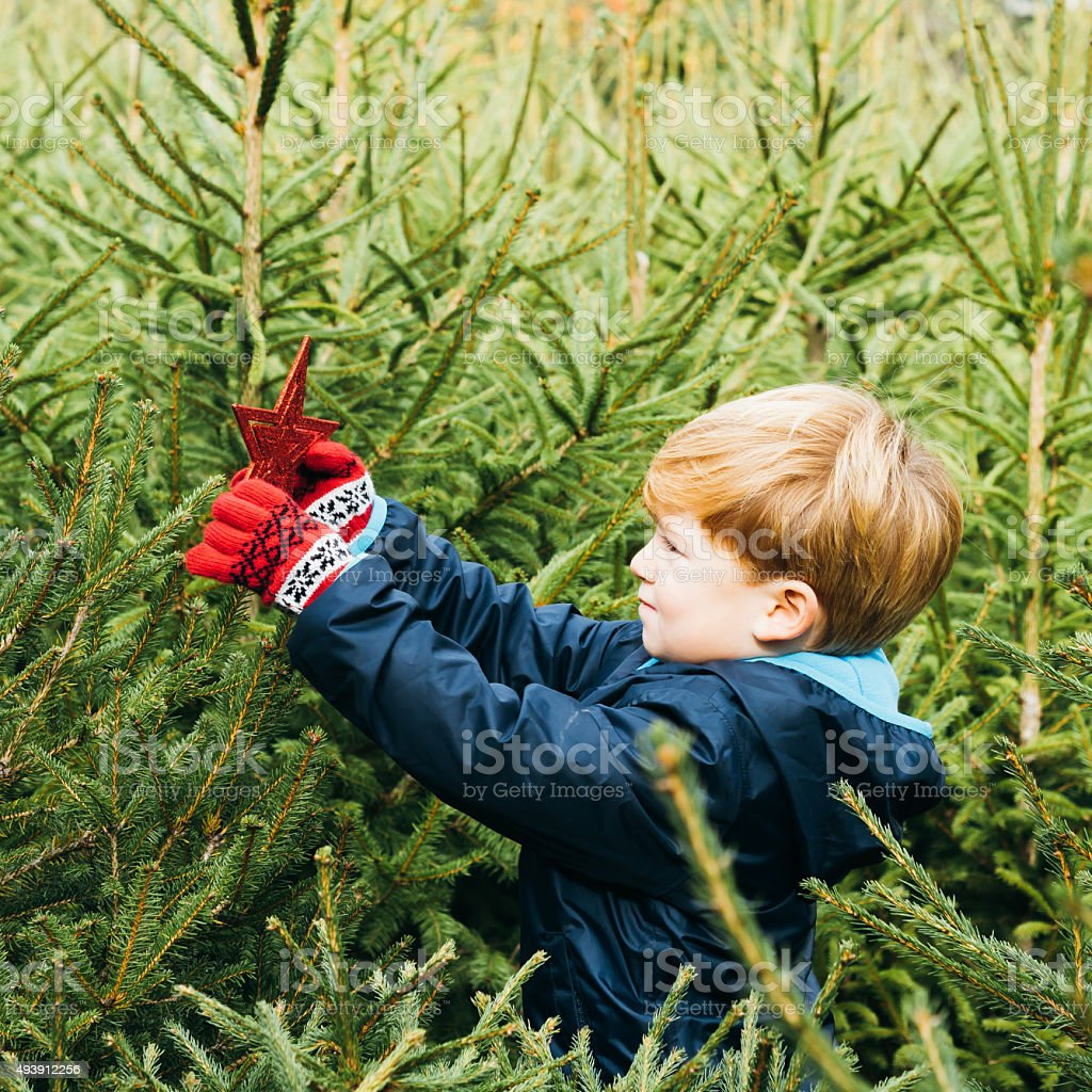 Young Boy Decorating A Christmas Tree Outdoor stock photo