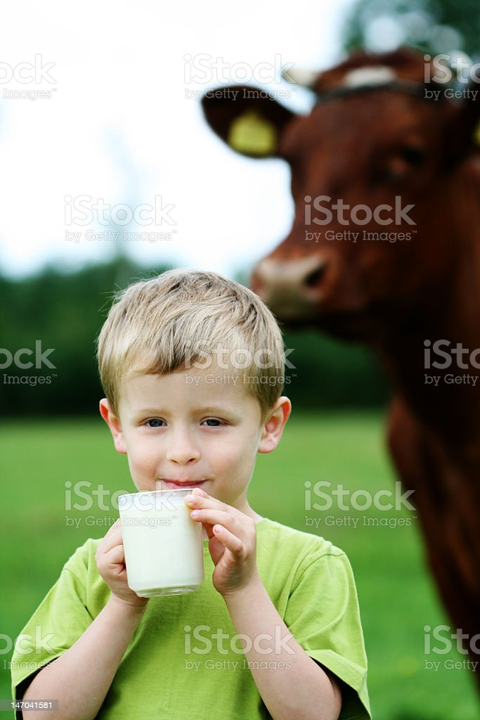 Young boy drinking milk in front of a cow stock photo