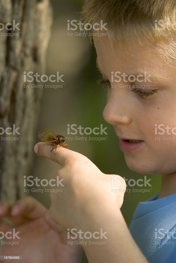Young Boy Examining A Cicada Bug royalty-free stock photo