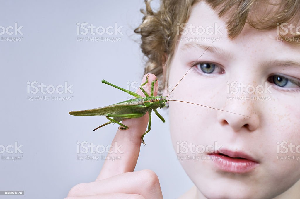 Young Boy Holding A Large Grasshopper or Locust royalty-free stock photo