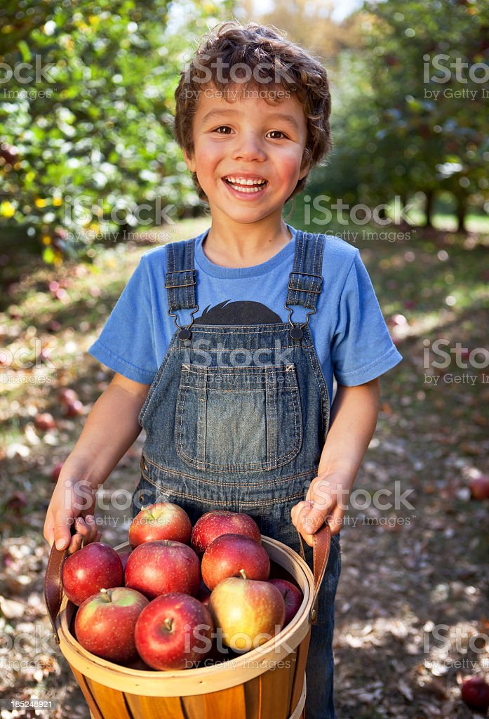 Young boy holding basket of freshly picked Minnesota apples royalty-free stock photo