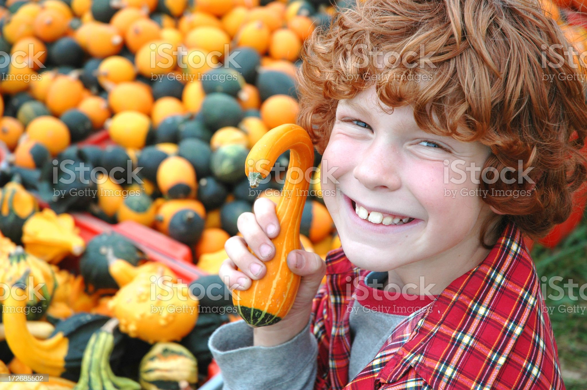 Young boy holding gourd and smiling next to other gourds royalty-free stock photo