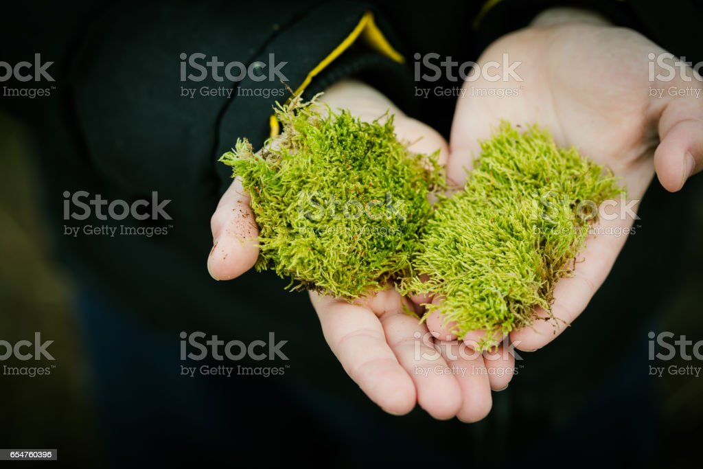 Young boy holding green heart made from moss stock photo