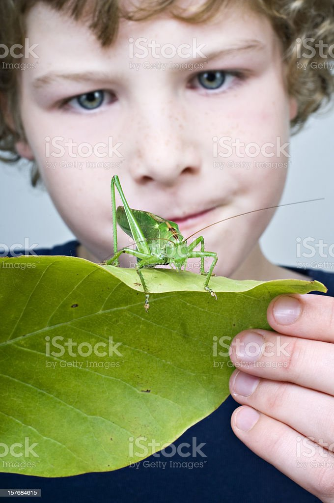 Young Boy Holding  Large Grasshopper or Locust On A Leaf royalty-free stock photo