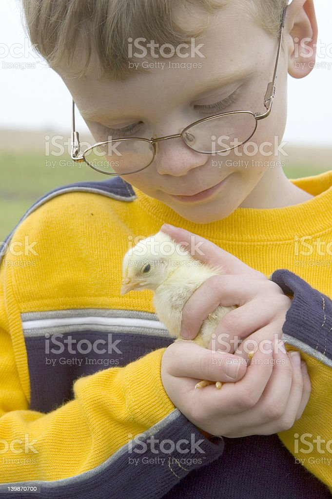 Young boy holds a baby chick 03 stock photo