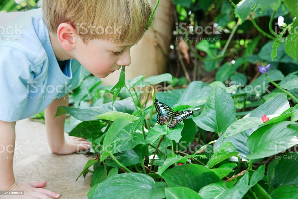 Young boy looking down at a butterfly on top of a leaf royalty-free stock photo