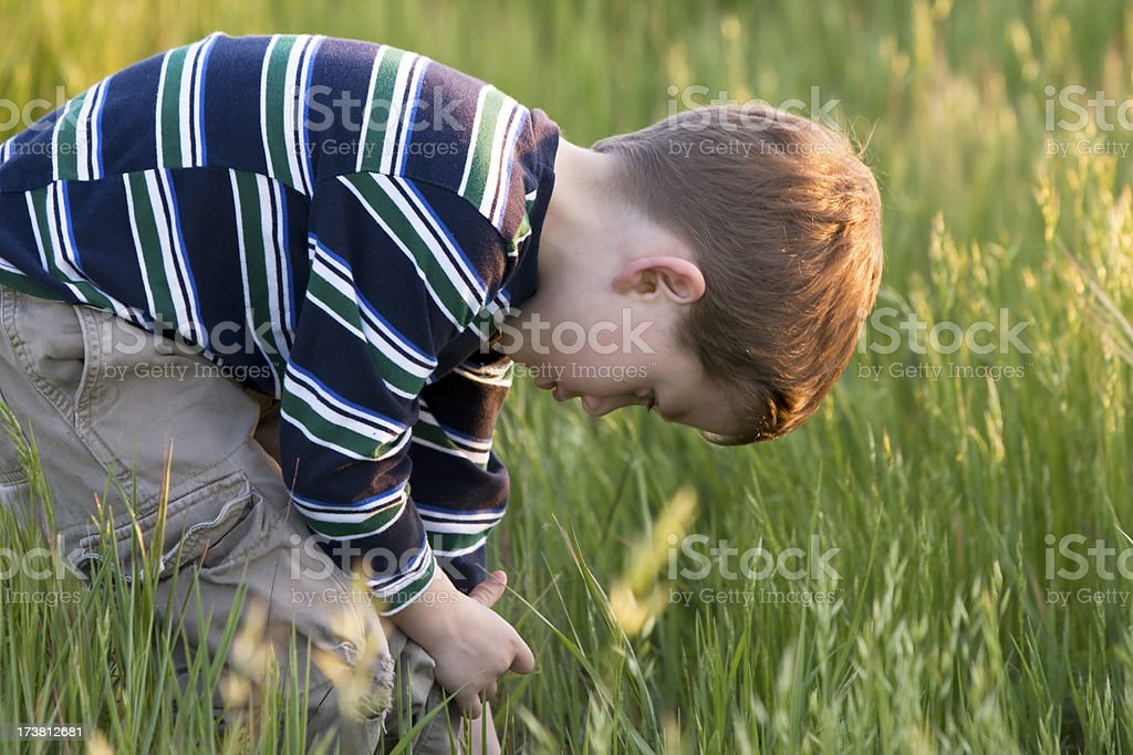 Young Boy Looking for Bugs in the grass stock photo