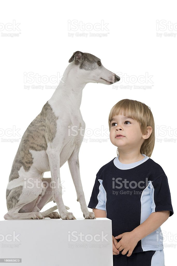 Young Boy observe a dog stock photo