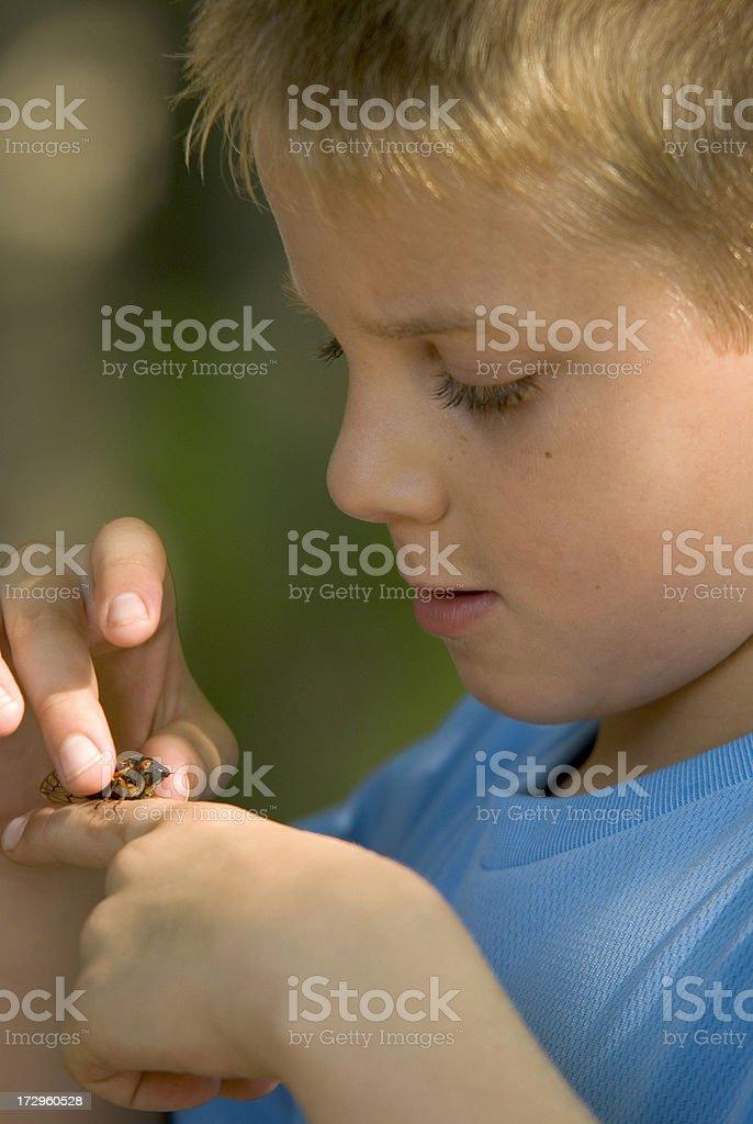 Young Boy Picking Up & Examining A Cicada Bug stock photo