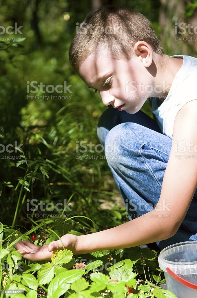 young boy picking wild strawberry royalty-free stock photo