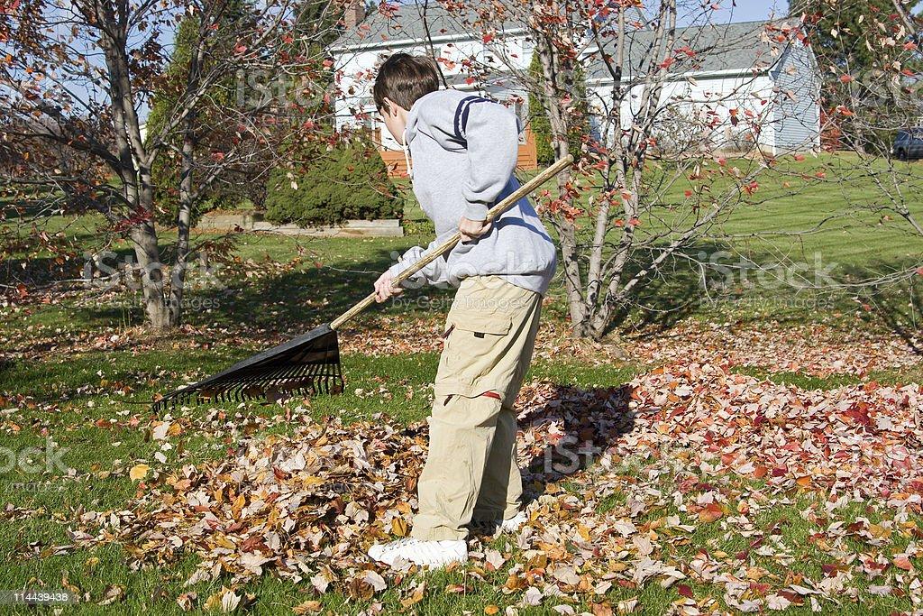 Young boy raking fall leaves in a backyard stock photo