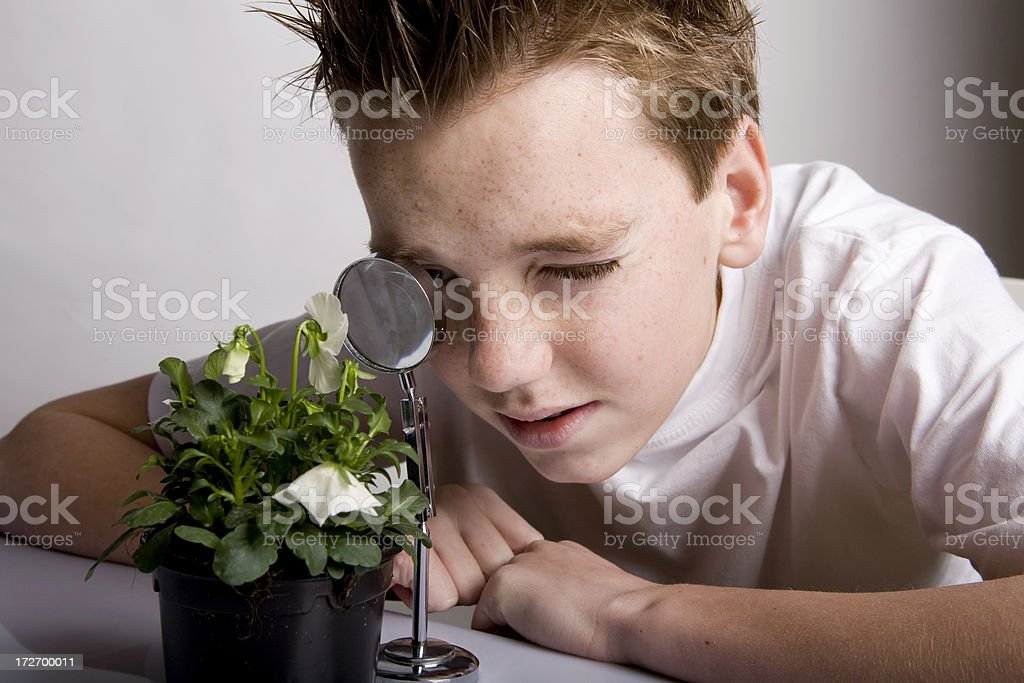 Young boy researches structure plant with magnifying glass royalty-free stock photo