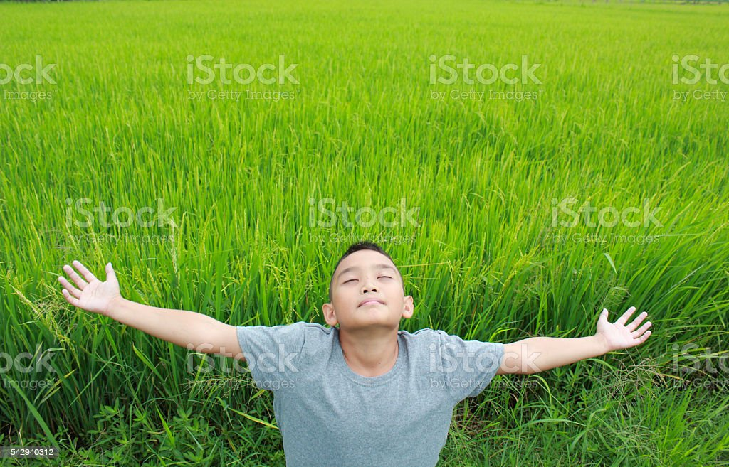 Young boy standing in the rice field Lizenzfreies stock-foto