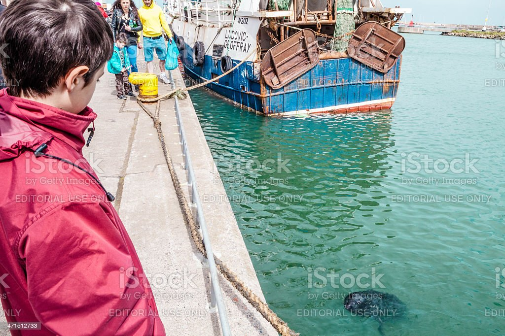 Young Boy watching Harbor Seal stock photo