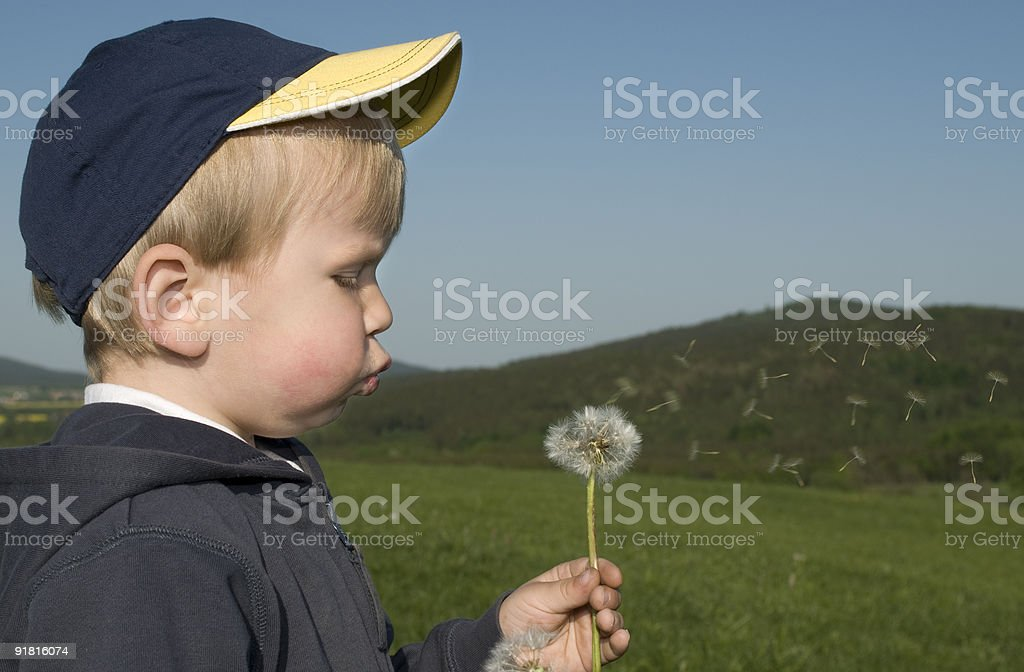 Young boy with a blowball. stock photo