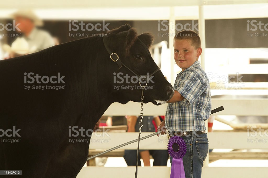 A young boy with a people ribbon holding a black cow stock photo