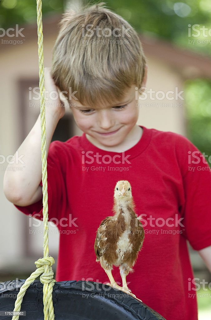 Young Boy With Baby Chick royalty-free stock photo