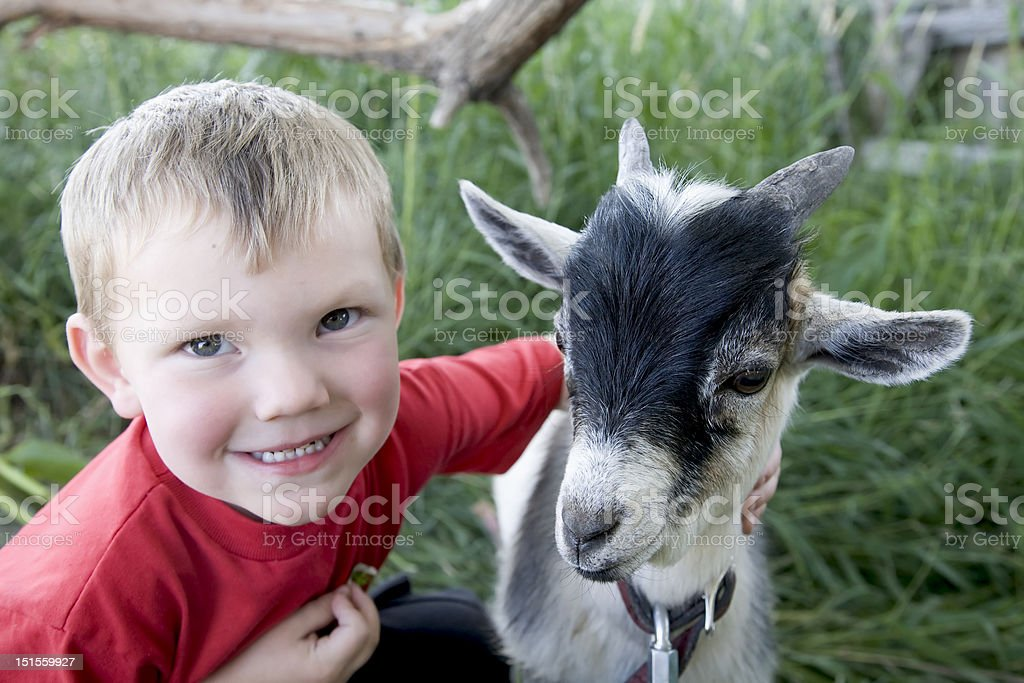 Young boy with goat stock photo