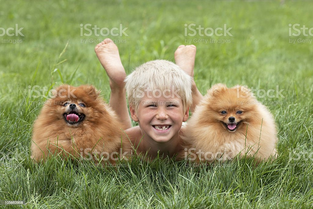 Young boy with two dogs royalty-free stock photo