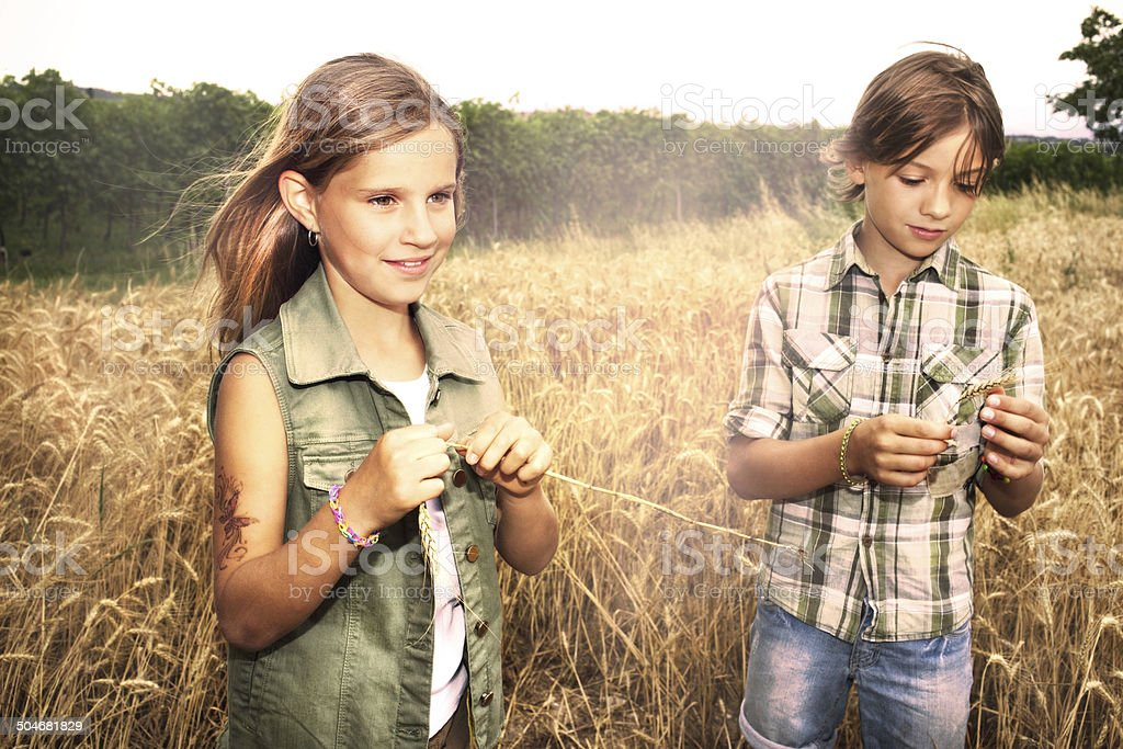 young boys having fun in the wheat field stock photo