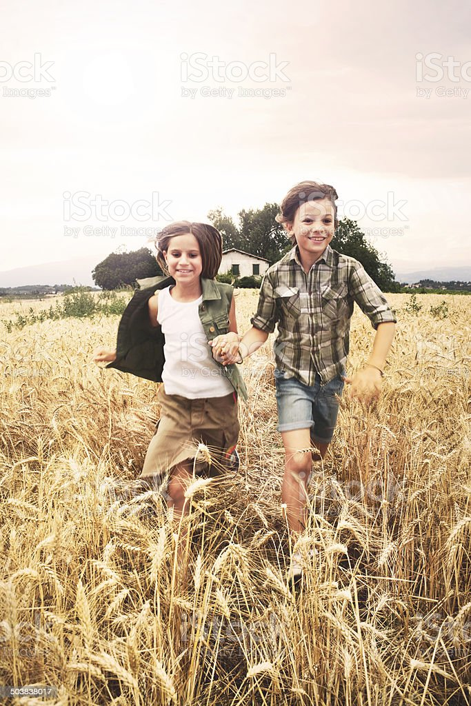 young boys  running in the wheat field stock photo