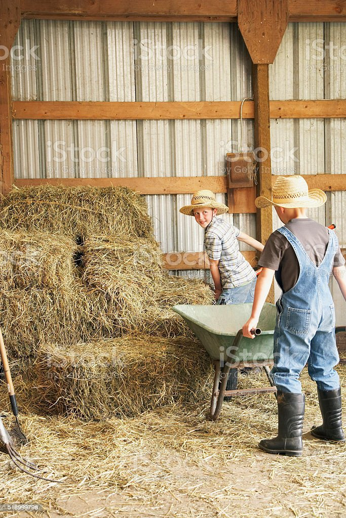 Young boys working in barn stock photo