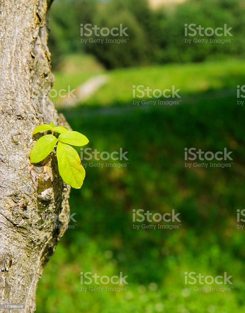 Young branch stock photo