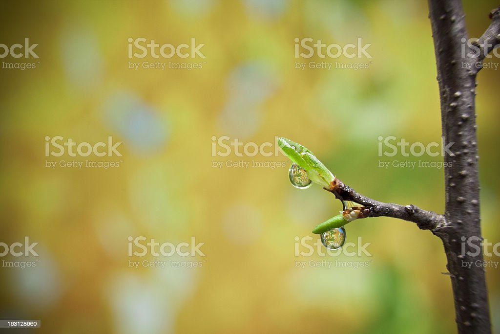 Young bud royalty-free stock photo