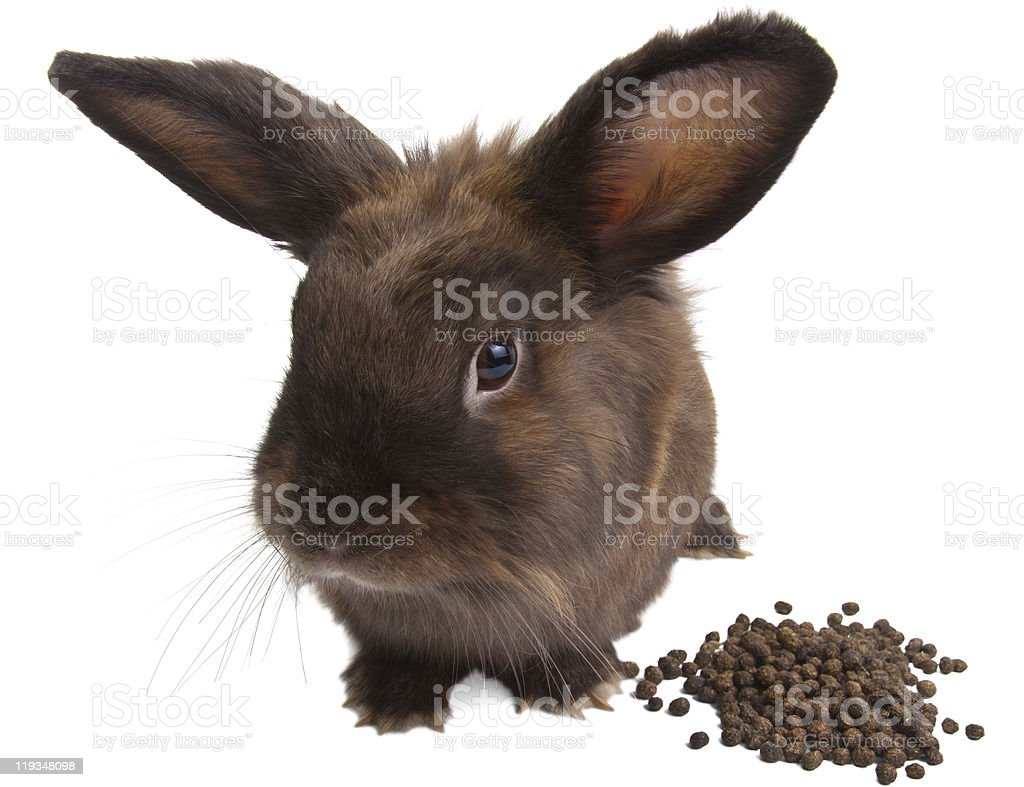 Young bunny stock photo