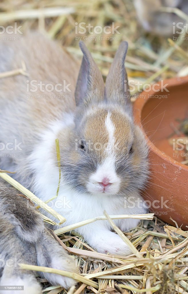 Young bunny sitting on straw. royalty-free stock photo