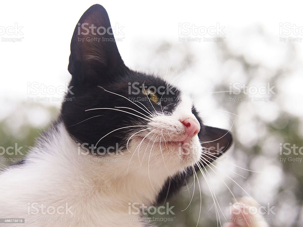 young cat, black and white,  close-up, will scratch himself stock photo